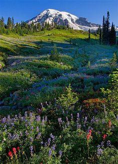 Mt. Rainier wildflowers, Washington State