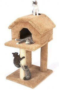 Kitty Bird House With 3 Posts Small Cat Tree Lots Of Room For Little
