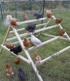 Chicken Coop - This is a gem of an idea. How to build a simple jungle-gym for your chickens Building a chicken coop does not have to be tricky nor does it have to set you back a ton of scratch. Types Of Chickens, Keeping Chickens, Pet Chickens, Raising Chickens, Urban Chickens, Diy Toys For Chickens, Chicken Life, Chicken Runs, Chicken Houses