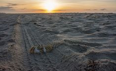 Ghost crab at sunrise, Portsmouth Island NC Portsmouth Island, Outer Banks Nc, My Happy Place, North Carolina, Sunrise, To Go, Beach, Places, Inspire