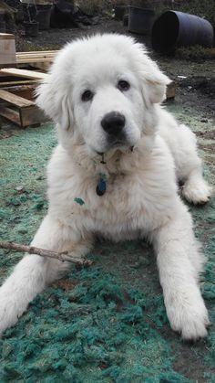 A picture I took of my friend's puppy http://ift.tt/2lnRE8d