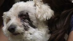 5 asombrosos relatos de perros heroicos