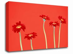 Red Daisies on Orange for Jen???