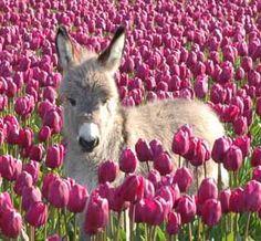 I want a miniature donkey! Please!!