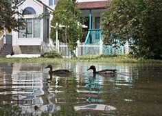 Unos patos nadan en una calle inundada en Calgary, Alberta, donde aproximadamente 75 mil canadienses fueron desalojados de sus hogares por las intensas lluvias. Foto: Reuters