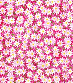 Keepsake Calico™ Cotton Fabric-Packed Daisy Pink