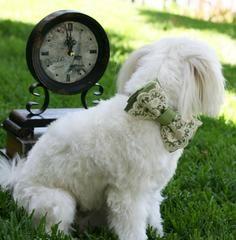 Green Dog Bow Tie, Vintage Wedding, Pet wedding accessory,Wedding accessory, boho wedding, Victorian wedding - LA Dog Store  - 1