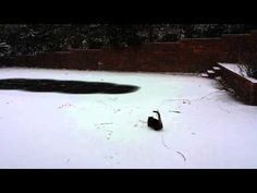 Watch this Alabama Cat Play in Snow for the First Time.