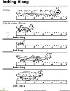 Worksheets: Measuring Inches: Inching Insects (they have more, just use the search bar)