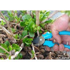 Mejores 14 Imagenes De Plantas En Pinterest Plantas Jardin Poda - Hortensias-cuidados-maceta