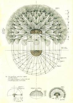 Antique Botanical Illustration of Dandelion Seedhead - Art and Design Geometry Art, Sacred Geometry, Art And Illustration, Botanical Illustration Black And White, Illustrations, Botanical Drawings, Botanical Prints, Dandelion Art, Dandelion Drawing