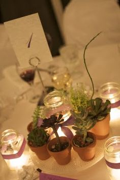 succulents centerpieces