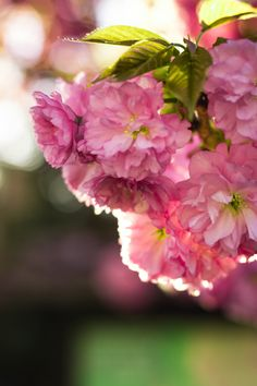 Spring Blossom, Instagram Ideas, Shades, Rose, Flowers, Plants, Pink, Pictures, Sunnies