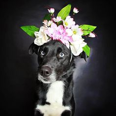 Photographer Helps Often-Overlooked Black Dogs Get Adopted With Beautiful Portraits