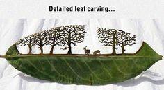 Incredible Art On A Leaf