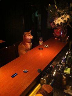 so a dog walks into a bar