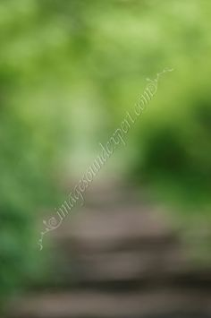 blur green spring  background