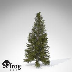 b440cdc2f 3D Models, Download 3D Models at TurboSquid Spruce Tree, Fir Tree,  Christmas Tree