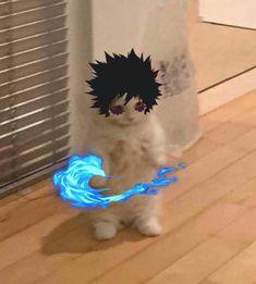 Anime Meme, Funny Anime Pics, Otaku Anime, Manga Anime, Cat Character, Cute Anime Character, Anime Kitten, Cat Icon, Cat Aesthetic