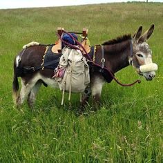 Knee-deep in elevenses... Courtesy: Hannah Engelkamp, seaside donkey. London (UK).