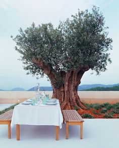 a lunch under a tree
