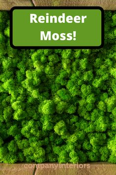 In Our Moss Shop you will find all the products you will need  to make moss wall art to build a moss wall using preserved moss. The Moss used in Ball Moss ,Flat Moss and Lichen. The Moss wall requires no maintenance whatsoever. Sustainable sources provide the moss and reindeer moss is a popular product from Scandinavian moss sources.  So you can create your own moss wall and install in your office or home. #mosswalls #mosswallart #moss #flatmoss #preservedmoss #mossart #homedecor Moss Wall Art, Moss Art, Money Tree Bonsai, Board Rooms, Diy Crafts Materials, Moss Letters, Moss Decor, Ivy Wall, Hotel Reception