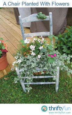 Many household objects can be used as containers in the garden. I love to use old chairs in the garden to add height and interest to an area that might be otherwise plain without it.