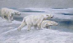 Arthur Wardle - Polar Bears
