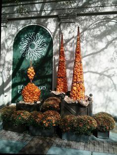 Mini pumpkin topiaries at Longwood Gardens