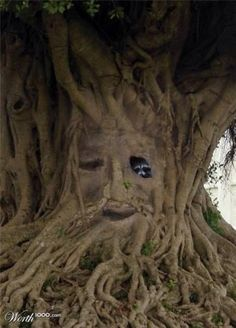 ROFL Are we going to talk about the obvious blurs of a really bad photoshop job on this tree? Just cut and paste a face on any ole tree even if it's one that doesn't ever knot up like this. Weird Trees, Animal Reiki, Magical Tree, Tree People, Tree Faces, Unique Trees, Tree Carving, Weird Pictures, Weird And Wonderful