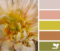 bloom dew greywash grey green brown reddish design-seeds.com