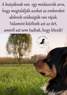 Dog Quotes Love, Memes, Dogs, Animals, Animal Pictures, Animales, Animaux, Meme, Pet Dogs