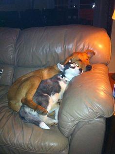Snuggles are nice #rescuedog #dog #itsarescuedoglife