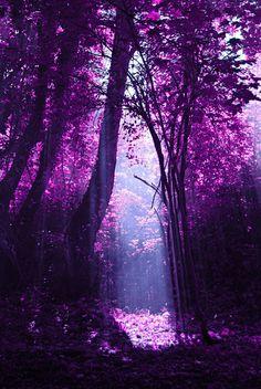 Lugar magnifico con arboles llenos de flores con un bello color