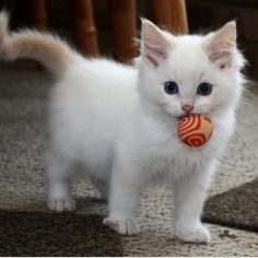 Cute Animals Killing Each Other below I Love Cats And Kittens Over 50 Breeds save Very Cute Baby Animals Pictures case Cute Girl Cartoon Animals Kittens And Puppies, Cute Cats And Kittens, I Love Cats, Crazy Cats, Kittens Cutest, Fluffy Kittens, Kittens Meowing, Ragdoll Kittens, Tabby Cats