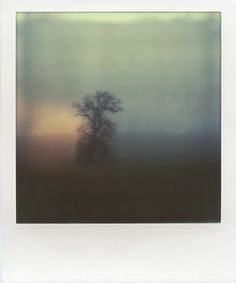 Tree in mist (Polaroid) by Konstantinos Besios Color Photography, Film Photography, Polaroid Photos, Polaroid Pictures Photography, Vintage Polaroid, Experimental Photography, Lomography, Nostalgia, Mists