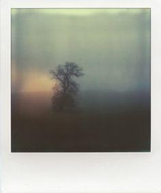 Tree in mist (Polaroid) by Konstantinos Besios Color Photography, Film Photography, Polaroid Photos, Polaroid Pictures Photography, Vintage Polaroid, Experimental Photography, Aesthetic Photo, Mists, Photo Art