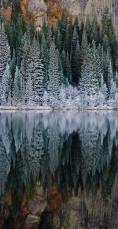 Bear Lake in Rocky Mountain National Park, Colorado by rosalie