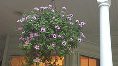 Porch hanging basket