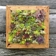 If you want to start a garden without giving up patio space, this vertical, framed succulent garden kit might be the solution.  Vertical Living Wall Art Kit, $60 via So Succulent