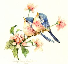 An 8 x original watercolor of two birds and flowers by Carolyn Shores Wright. Birds of all types--serious, whimsical and humorous--have always been one of her favorite topics.She has also enjoyed painting flowers. Bird Drawings, Cute Drawings, Watercolor Bird, Watercolor Paintings, Bird Pictures, Vintage Birds, Art And Illustration, Bird Prints, Bird Art
