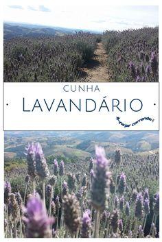 Cunha. O que fazer em Cunha. Como chegar ao Lavandário. O Lavandário. Lavandário. O Lavandário em Cunha. Passeios em Cunha. Atrações em Cunha. Turismo em Cunha.