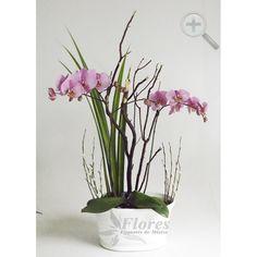 Floreria - Flores Elegantes de Mexico arreglo orquideas