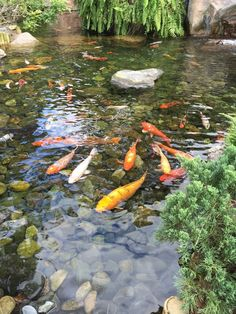 Floating fish koi pond observatory lets you view your fish for Koi zen facebook