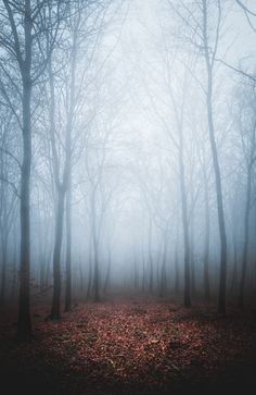 """freddie-photography: """" Finding Peace, whilst being totally Lost - Oxfordshire, UK by Frederick Ardley Photography - www.freddieardley.com """""""