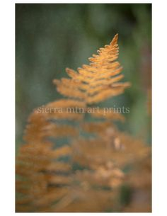 Yellow Fern Abstract Fall Color Metallic by SierraMtnArtPrints