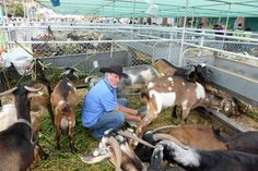 Feria de ganado en Arucas