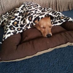 It's a dog-eat-dog world out there, but you can still protect your loved ones by making a dog bed they'll  feel cozy in. Learn this simple sewing project by following these Doggy Bed and Blanket Set instructions.