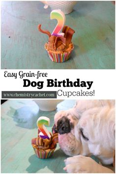 Easy, grain-free dog birthday cupcakes! These are the perfect, healthy, sweet treat to celebrate your pups next birthday! on chemistrycachet.com