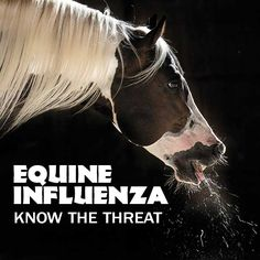Whether you're at home, on the road, or at a public facility, you can take steps to keep your horse healthy and EI-free. Learn how to protect your horse from influenza, a highly contagious respiratory disease. Sponsored by EQStable from Zoetis. www.TheHorse.com/EquineFlu #horses #horsehealth #influenza